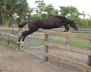 2008Foals/Backstage-MF-Jumping-gate.jpg