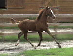 2008Foals/CarryOntrotting.jpg