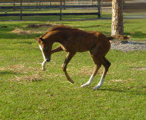 2008Foals/Catchbucking.jpg