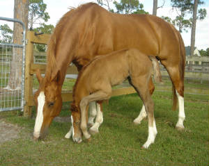 2008Foals/Just-like-Mom-2.jpg
