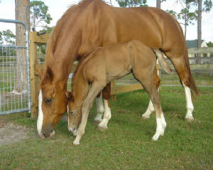 2008Foals/Just-like-Mom.jpg