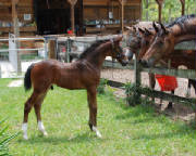 2009-Foals/1-2-yr-old-fillies-check-.jpg