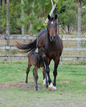 2009-Foals/72-Atti-12-hrs-old-front.jpg