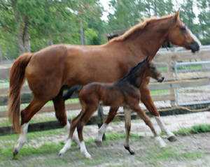 2009-Foals/BR-with-Mom.jpg