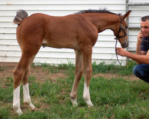 2010Foals/Grace-4-weeks-2.jpg