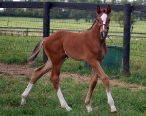 2010Foals/Grace-4-weeks.jpg