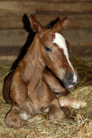 2010Foals/Grace-just-born-2.jpg