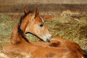 2010Foals/Grace-just-born.jpg