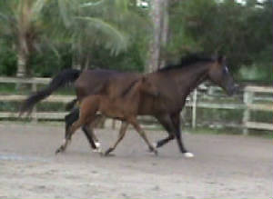 2010Foals/Libby-Big-trot-with-Mom.jpg