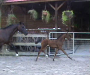 2010Foals/Libby-Bigger-trot-front-of-.jpg