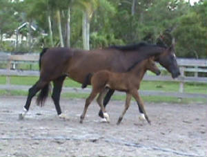 2010Foals/Libby-Small-trot-with-Mom.jpg