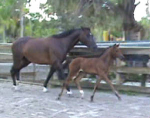 2010Foals/Libby-Trotting-with-Mom.jpg