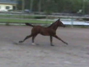 2010Foals/Libby-cantering.jpg