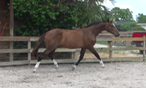 2010Foals/1Grace-just-2-yrs-10.jpg