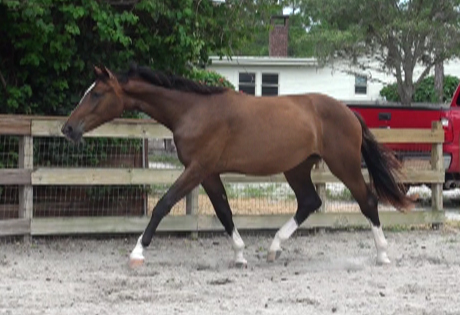 2010Foals/1Grace-just-2-yrs-3.jpg