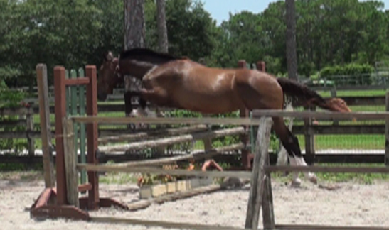 2010Foals/1Grace-just-2-yrs-9.jpg