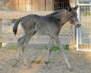 2011Foals/Blake-Walking_72.jpg