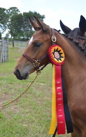 2012Foals/1-Maddie-head-ribbon_72.jpg