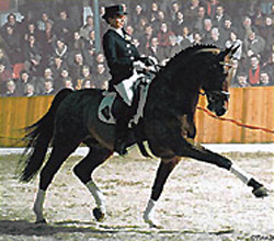 Pistol/pablodressage.jpg